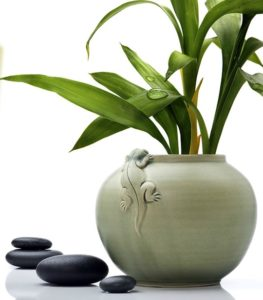 zen-pot