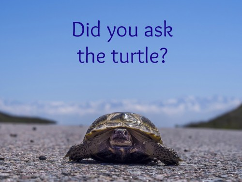 ask the turtle